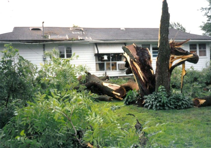 "Tell me, is ""The Bachelorette"" more important than this?? (my family's walnut tree, destroyed by a storm in 1993)."