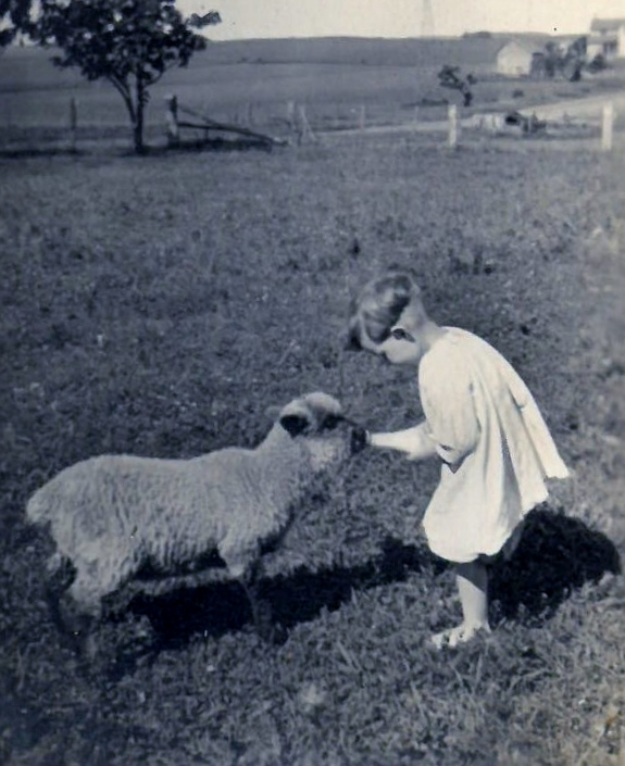 1920s floyd with sheep