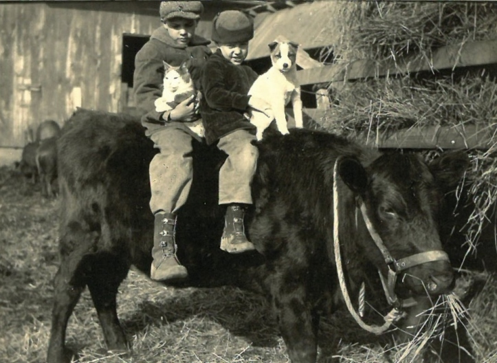 1924 floyd glenn bob cat pet the cow
