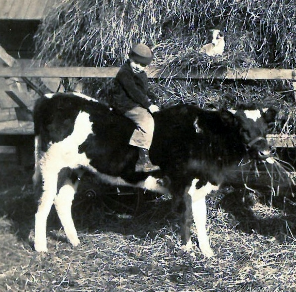 1925 on cow with bob the dog